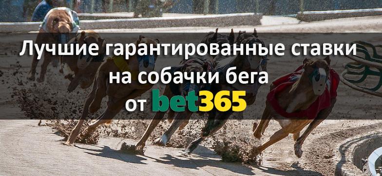 Лучшие гарантированные ставки на собачки бега от Bet365